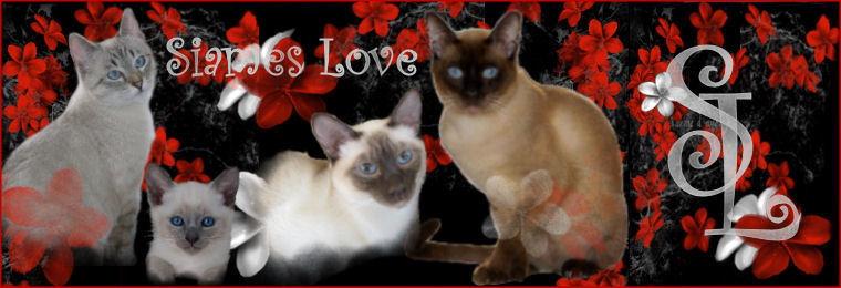 Siames Love