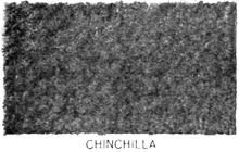 chinch10.jpg