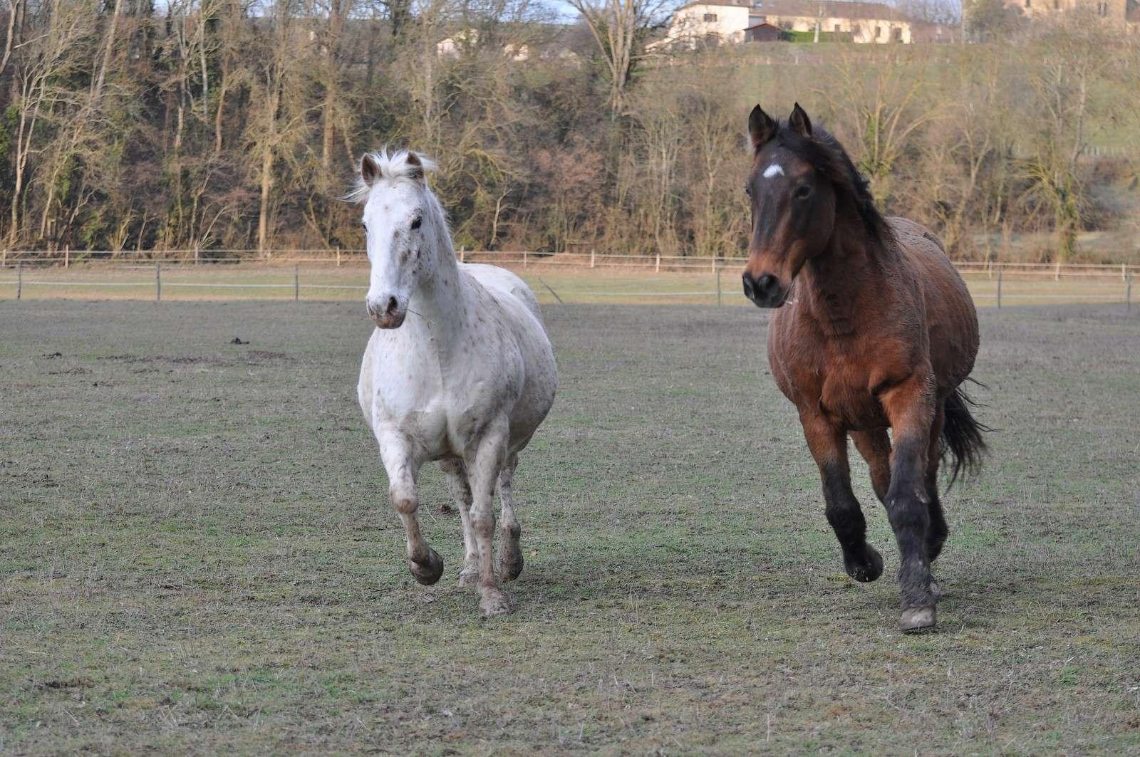 cheval10.jpg