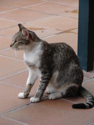 Les chats .... dans Proverbes, adages, etc chatht10