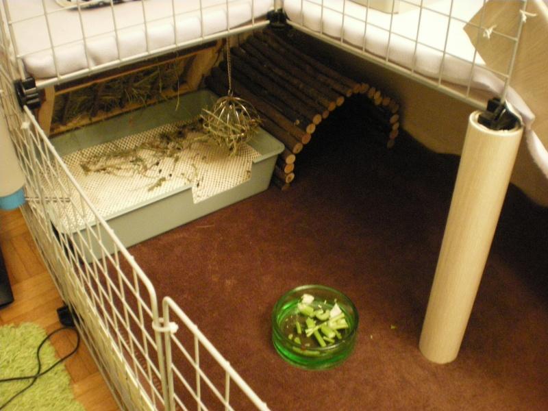Cavy Cage L 39 Assaut Page 4 Son Logis Forum De La Caverne Des Cochons D 39 Inde
