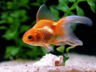 Non au bocal non aux aquariums de faible volume for Vente de poisson rouge grenoble