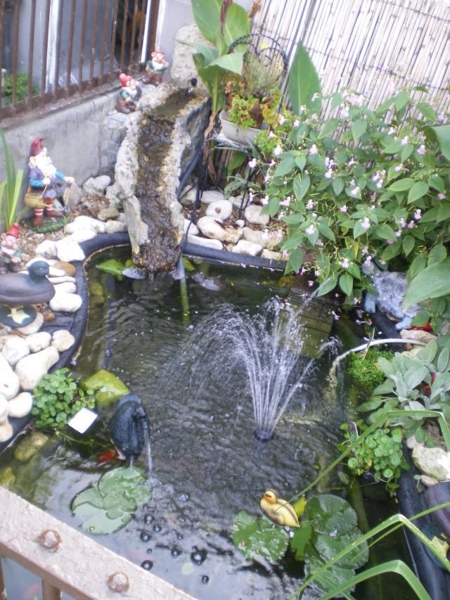 Mon bassin for Coque bassin poisson