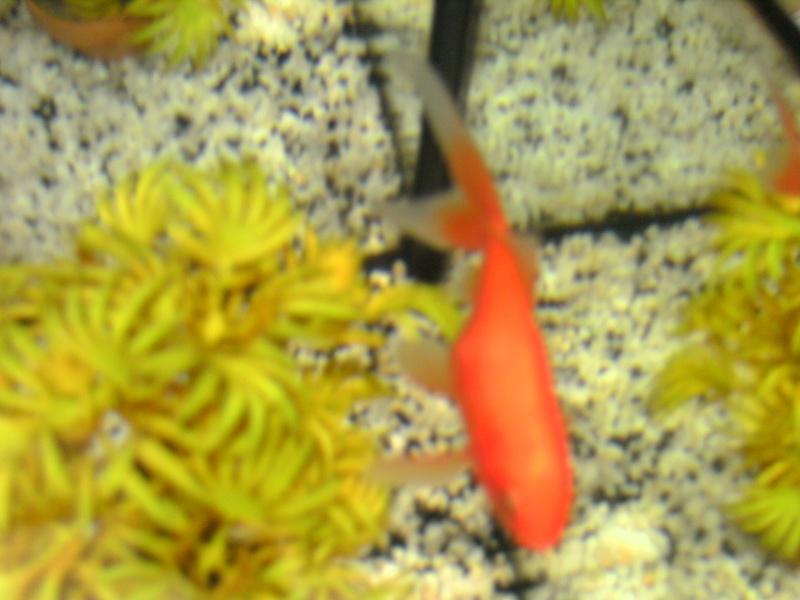 Boule sur un poisson rouge for Aquarium poisson rouge boule