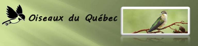 Forum Oiseaux du Québec