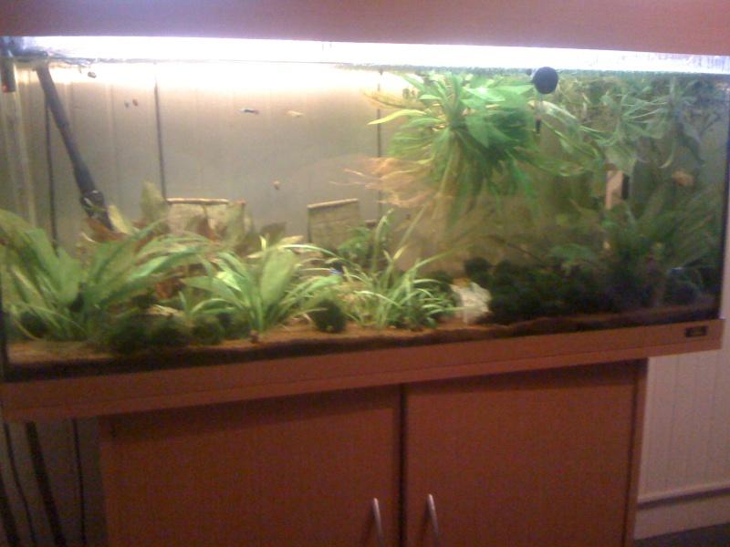Vend 73 divers aquariums et produits suite arret for Vend aquarium