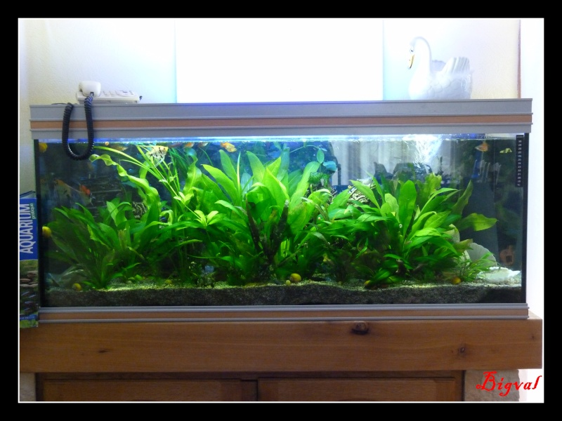 Les aquariums r gine62 for Aquarium de salon