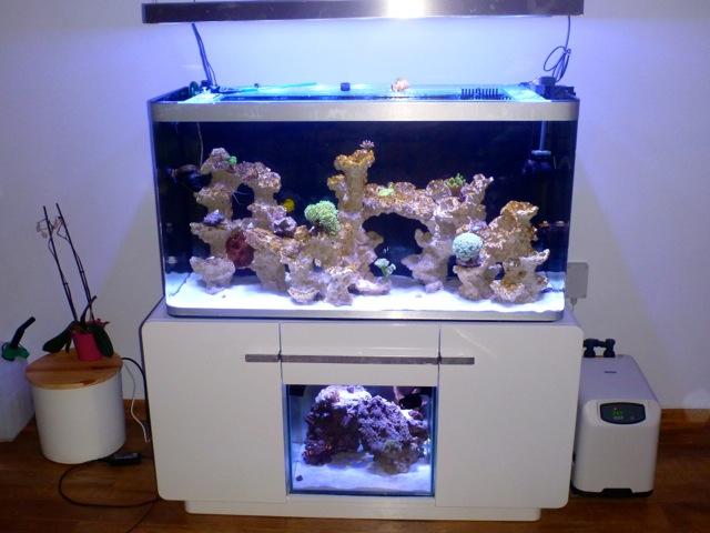 Aquarium osaka 320l eau de mer for Aquarium de mer