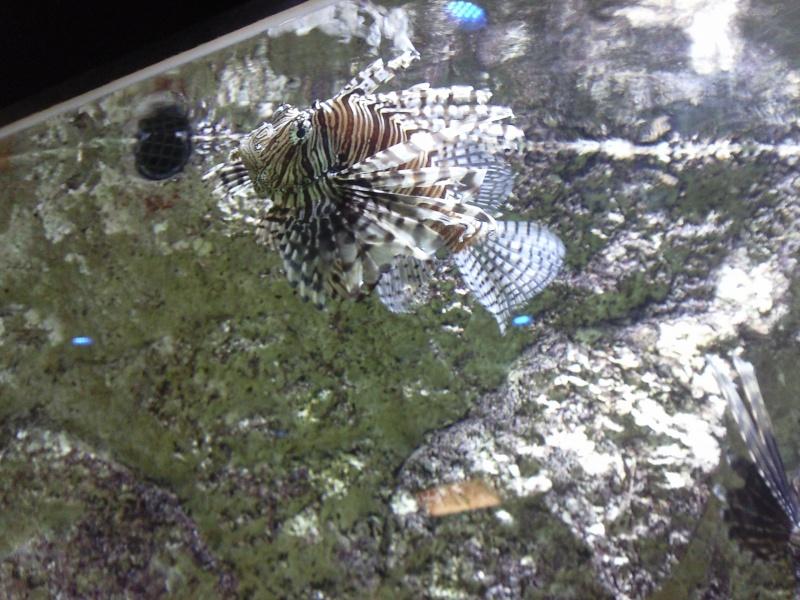 Re: [Visite] Aquarium du grand Lyon le Lun 14 Fev 2011 - 12:11