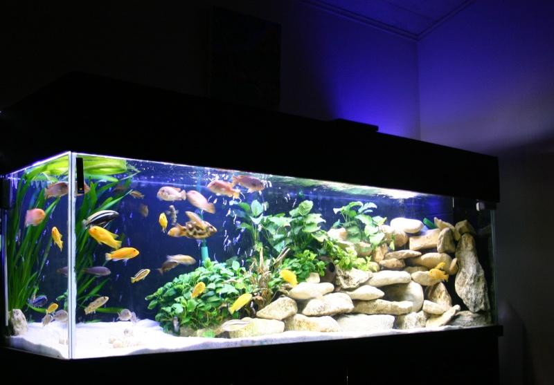 Aqua univers for Aquarium 600l