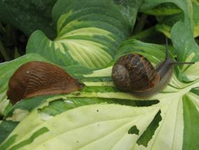 La limace et l'escargot dans FABLE limace10
