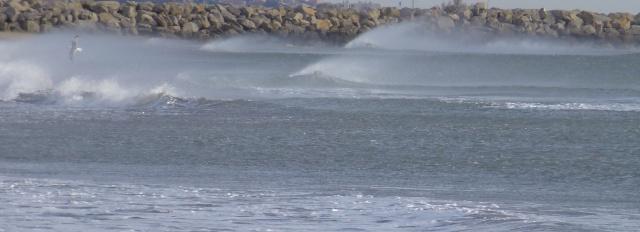 Les chevaux de mer dans GRUISSAN p1000712