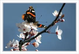 Un papillon fait le printemps dans LES 4 SAISONS papipr10