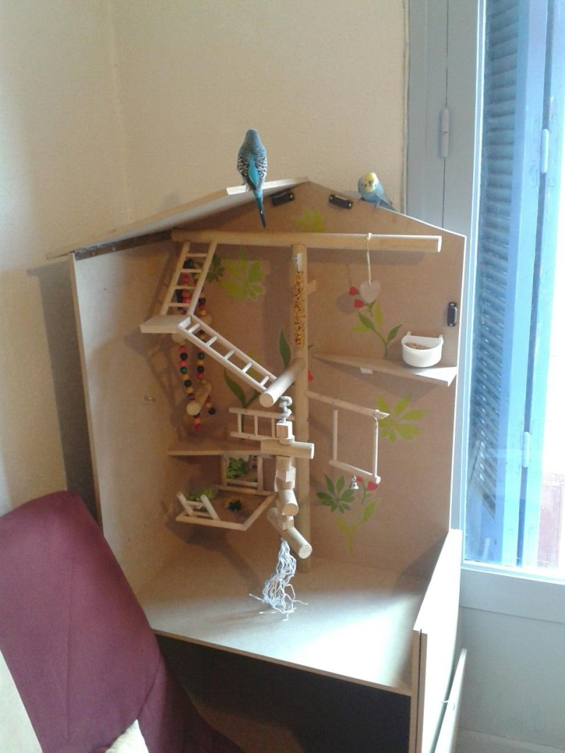 How to set up a bird cage for a parakeet or cockatiel for Construire une cage a lapin exterieur