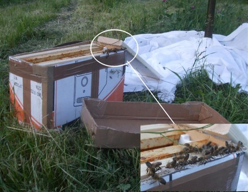 combien de ruches en r serve. Black Bedroom Furniture Sets. Home Design Ideas