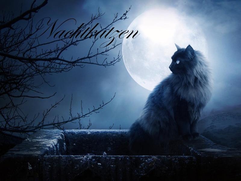 Nachtkatzen