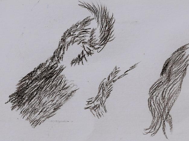 Comment dessiner des poils d animaux - Comment dessiner des animaux ...