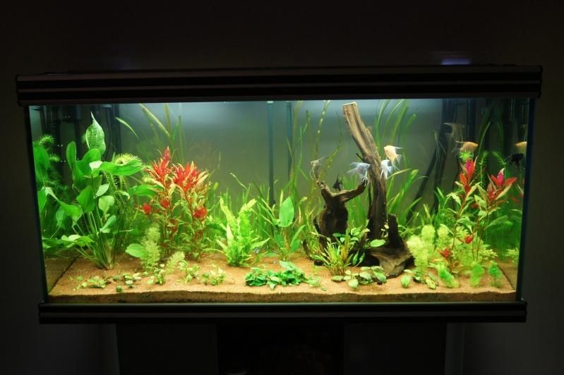 Demarage de mon aquarium 600l for Aquarium 600l